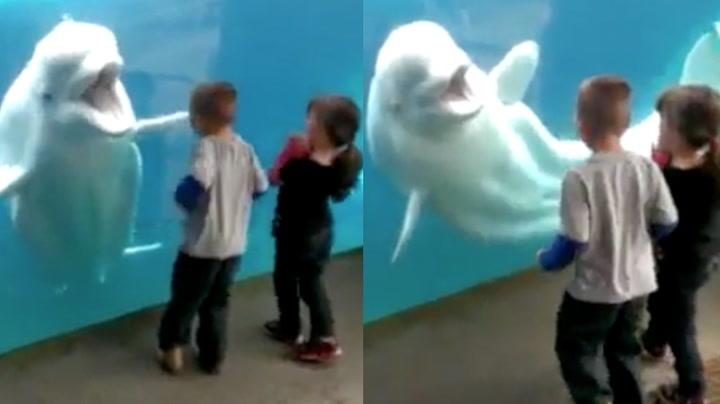 Barna presser ansiktet opp mot glassruta – da slår hvithvalen til