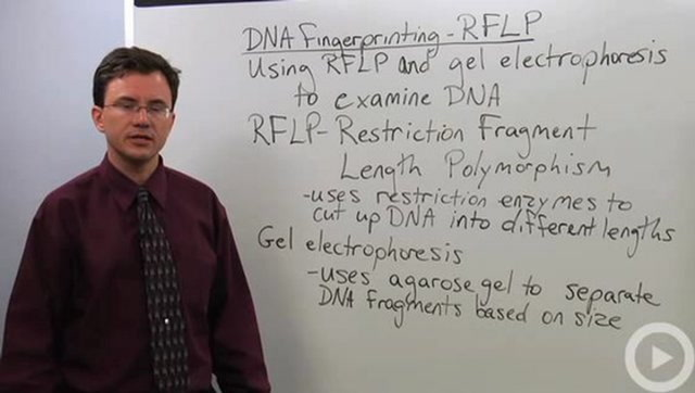 RFLP - DNA Fingerprinting
