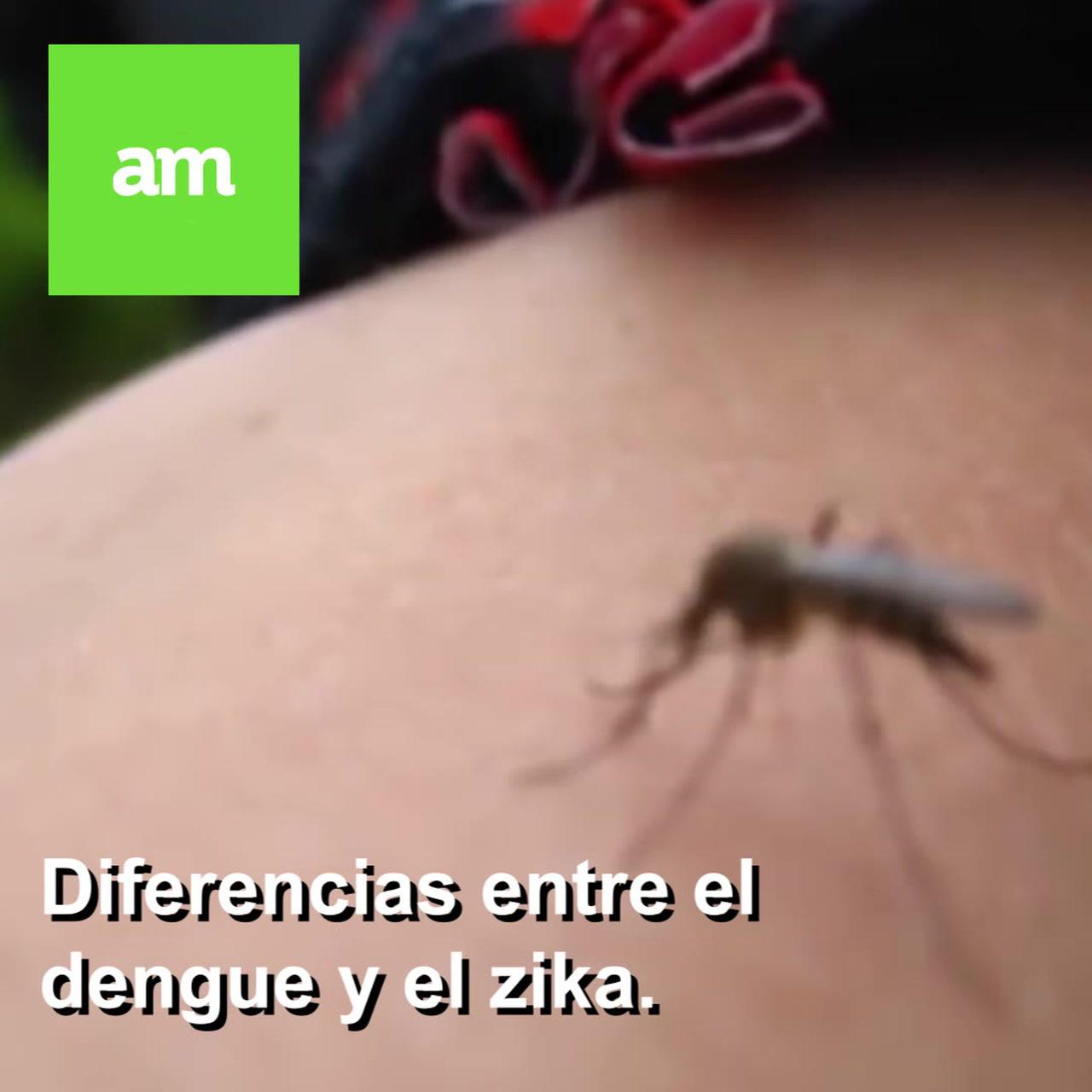 Dengue y Zika ¿cuáles son las diferencias?