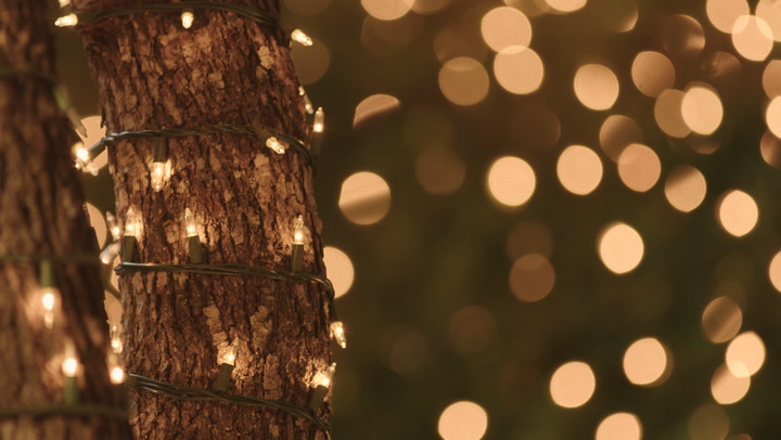 How To Wrap Trees With Outdoor Lights, How Many Feet Of Light Do You Need To Wrap An Outdoor Tree