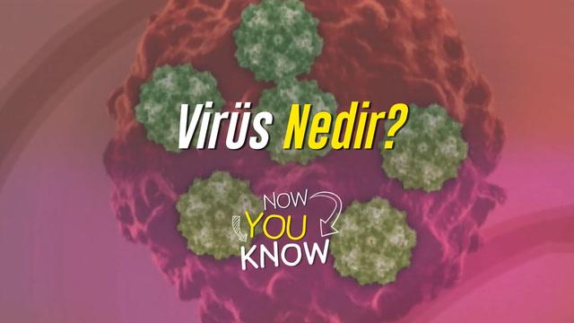 Now You Know - Virüs nedir?