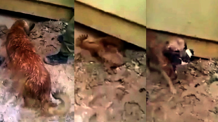 Hundemor reddet valpene fra drukningsdøden
