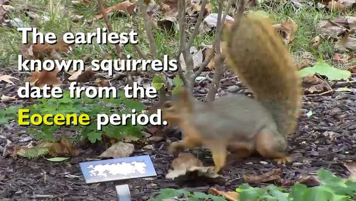 Squirrel Awareness Month