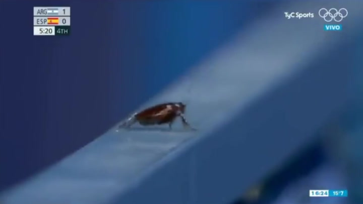Cameraman cuts away from Olympic hockey to film cockroach