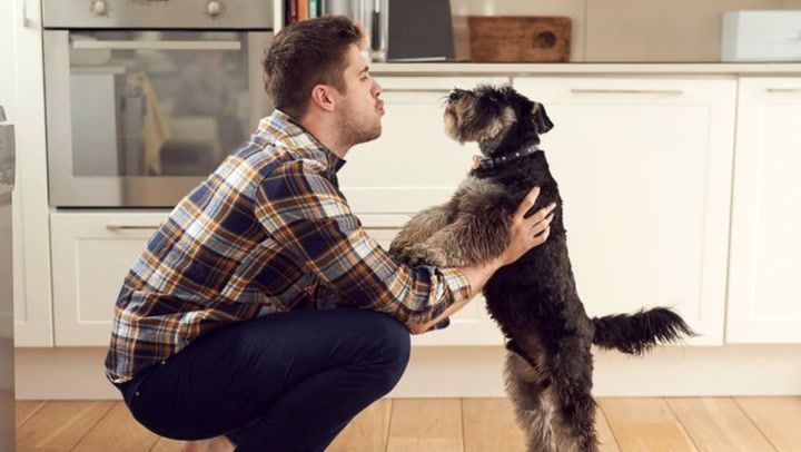 The Pet Lover's Guide to Buying a Home