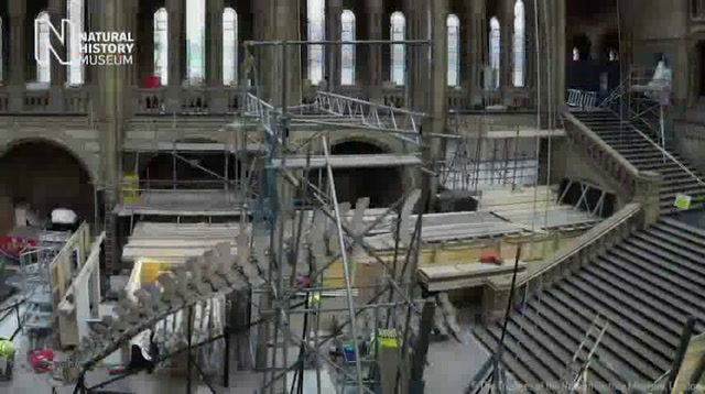 Timelapse of Blue Whale Installed at UK Museum