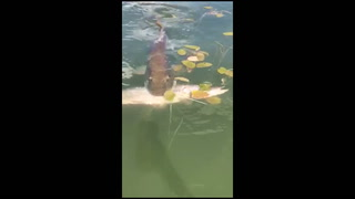 Muskie clamps down on northern pike in Itasca State Park
