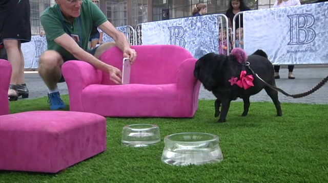 Art Exhibit Made For The Enjoyment Of Dogs