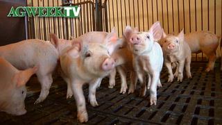 AgweekTV: Changes in antibiotics in livestock