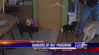 Rat poisons dangerous for pets at home