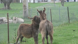 Donk and Little Man play around at E.T. Farms Animal Rescue in Delmont