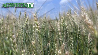 AgweekTV: Wheat demand