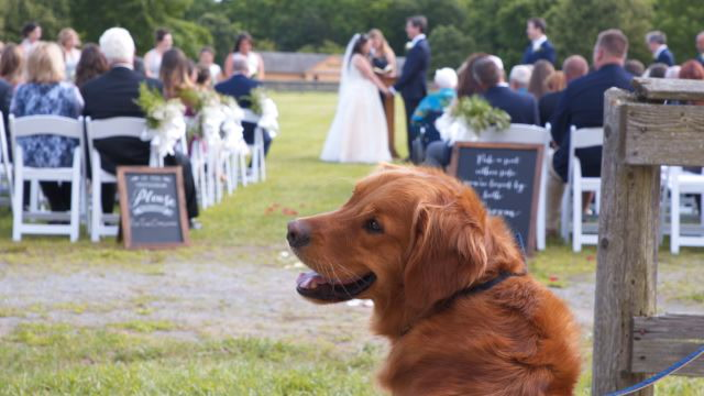 This Woman Will Walk Your Dog Down the Aisle At Your Wedding