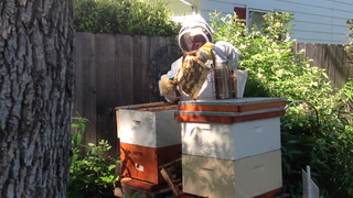 Beekeeping hobby helps longtime Grand Forks pastor 'contemplate, slow down and think'
