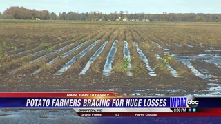 Potato farmers bracing for huge losses