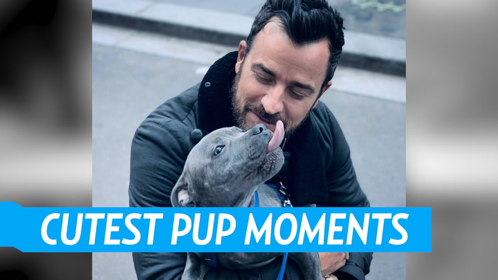 Justin Theroux's Best Moments With His Beloved Dog Kuma