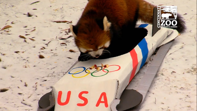These kids and animals' Olympic efforts deserve gold
