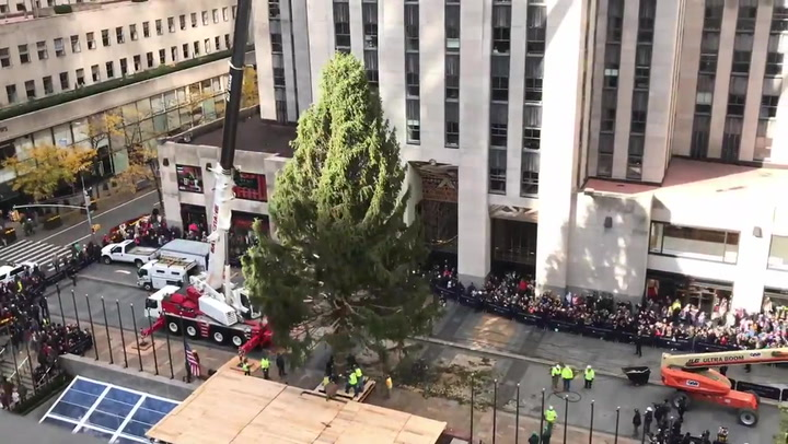 Fake vs. Real: Which Christmas Tree Is Better for the Environment?