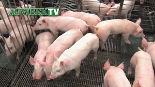 AgweekTV: A New Barn for Healthy Pigs (Full Show)