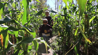 Brothers navigate their way through Engwall's Corn Maze