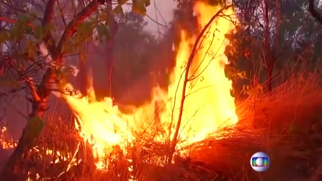 Why you should be worried about the fires raging in the Amazon