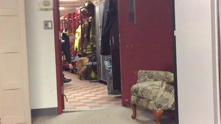 Arson dog trains no matter the weather