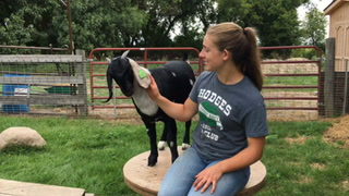 Emma Nelson 4-h preview