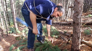 Local trees harvested for tepees at North Dakota camps