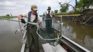 South Dakota GF&P tagging catfish along the James River