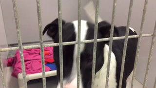 Several dogs looking for homes at FOA in Cloquet