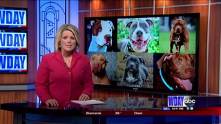 Pitbull stigmas are around the country and in our area