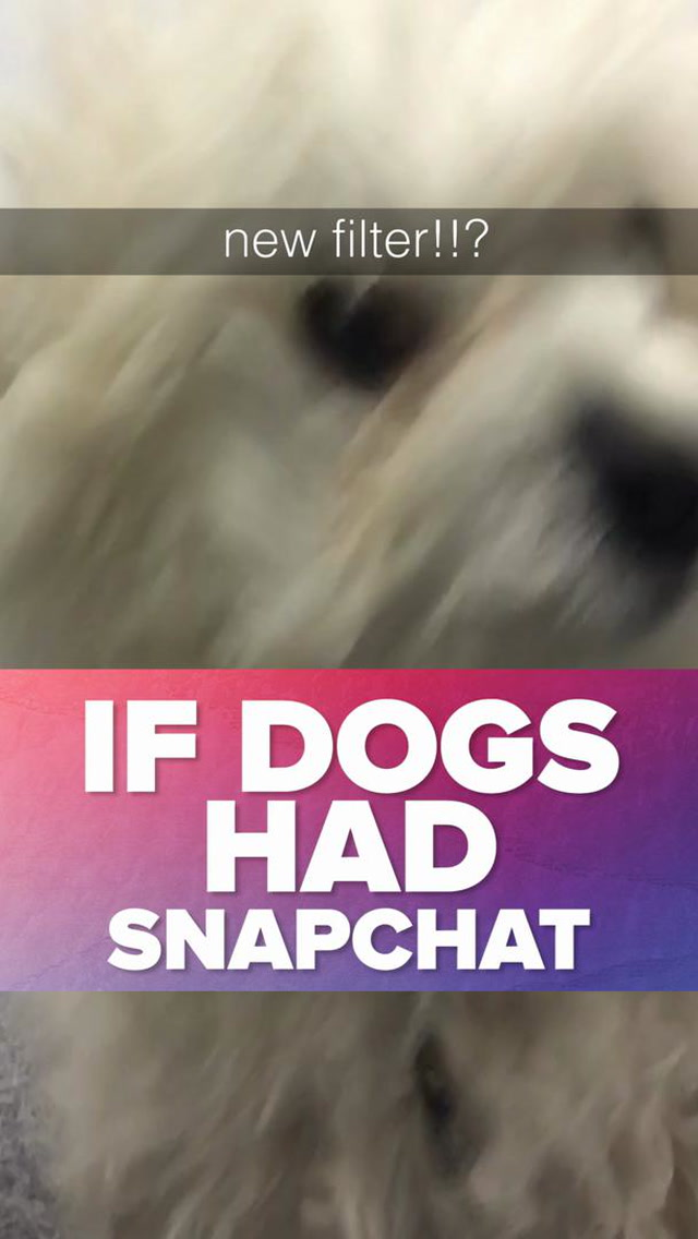 If Dogs Had Snapchat