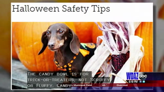 Animal Watch: Protecting pets during Halloween