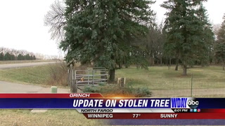 Stolen Christmas tree update: men forced to pay for cutting tree down