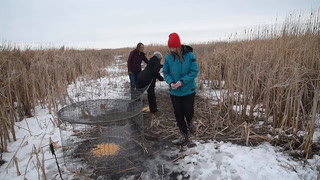 SDSU Ph.D. student conducts first of its kind pheasant collar tracking