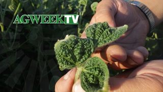 AgweekTV: Dicamba Damage in 2018 (Full Show)