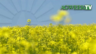 AgweekTV: Canola is king