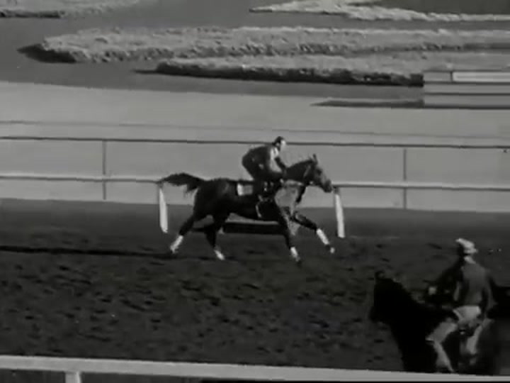 Seabiscuit's Hooves Reveal DNA Clues Into How He Became a Racing Legend