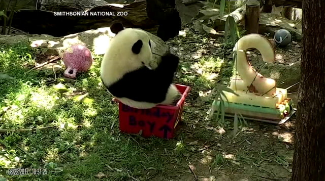 National Zoo Marks Bei Bei's 2nd Birthday