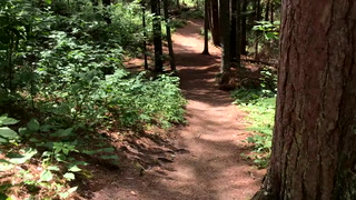 The Lost Forty: Exploring an old-growth pine forest