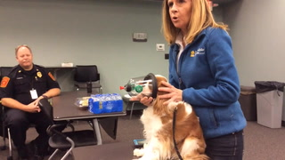 Dog demonstrates pet oxygen mask
