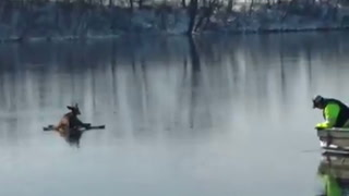 Men rescue deer trapped on ice near Evansville
