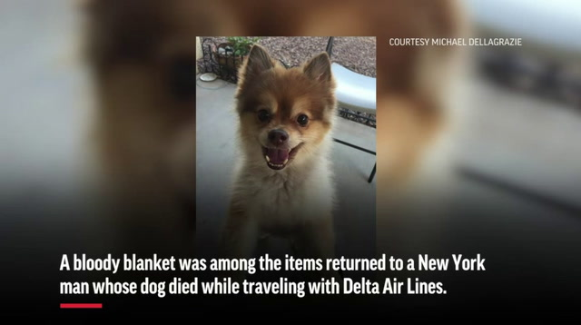 Owner Seeks Answers in Dog's Airline Death