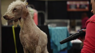Juniors compete in Duluth dog show at the DECC