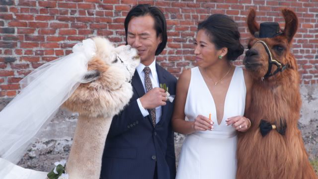 These Wedding Llamas Are the Perfect Addition to Any Reception