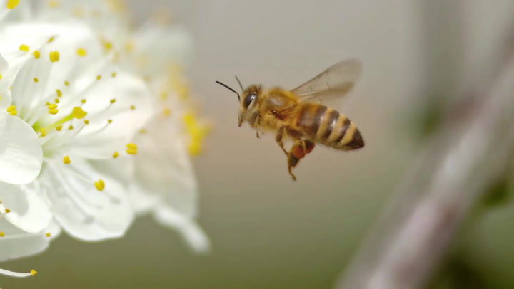 Bees Grasp a Math Concept That Took Modern Humans a Long Time to Understand