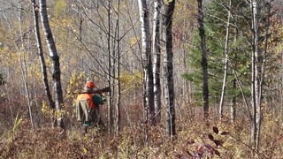 Grouse hunting in Douglas County, Wis.