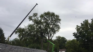 Tree removal in Red Wing