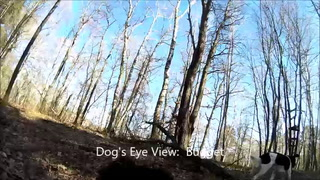 A Dog's Eye View: Bugget