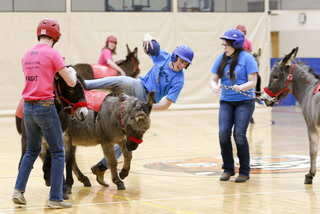 Photo Gallery: Donkey Basketball